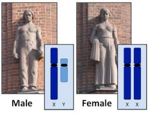 03-Frauen-3
