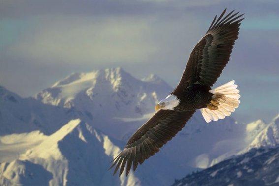 5-soaring-eagle